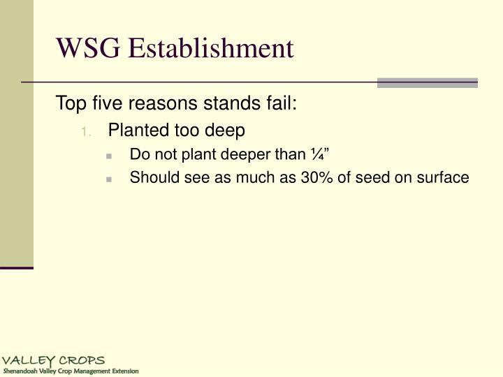 WSG Establishment