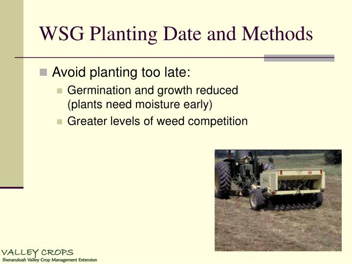 WSG Planting Date and Methods
