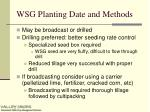 wsg planting date and methods1