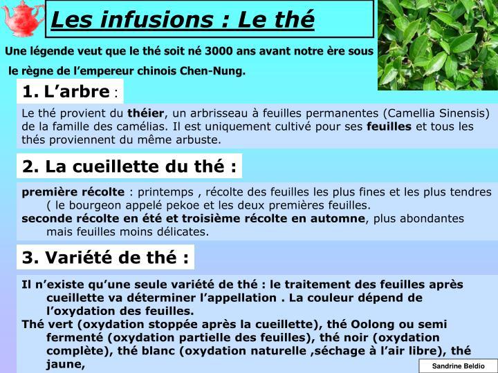 Les infusions : Le thé
