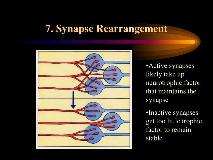 7. Synapse Rearrangement