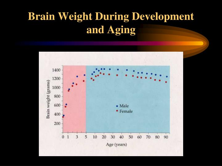 Brain Weight During Development and Aging