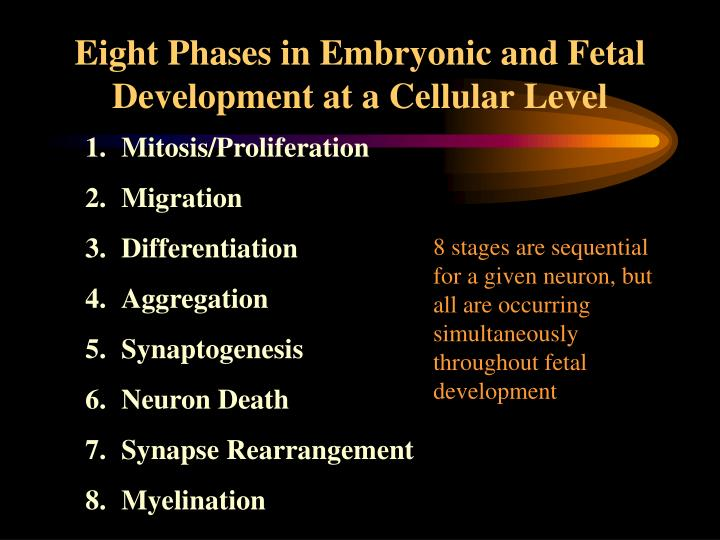 Eight Phases in Embryonic and Fetal Development at a Cellular Level