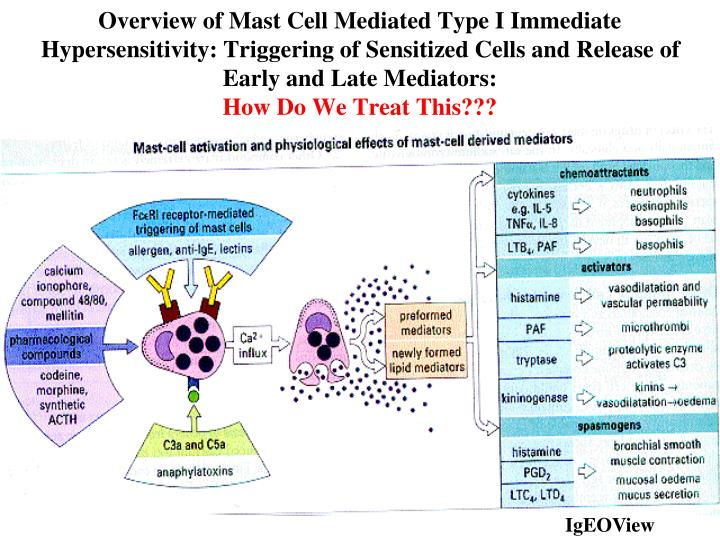 Overview of Mast Cell Mediated Type I Immediate