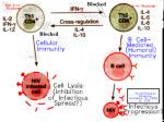 th1 and th2 in disease
