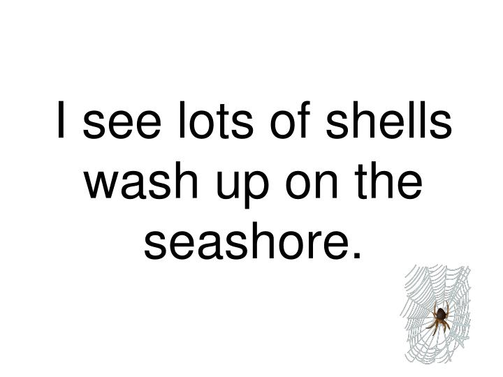 I see lots of shells wash up on the seashore.