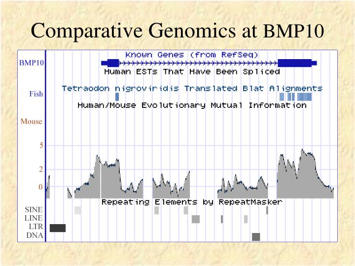 Comparative Genomics at