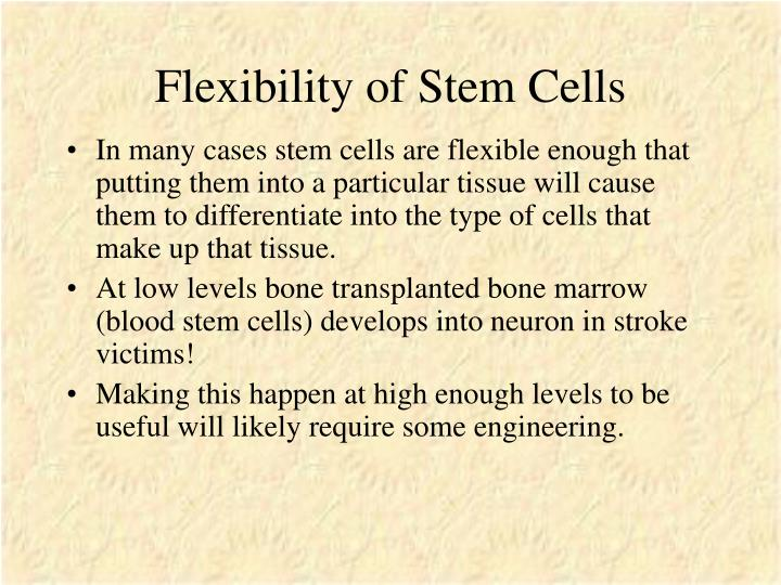 Flexibility of Stem Cells