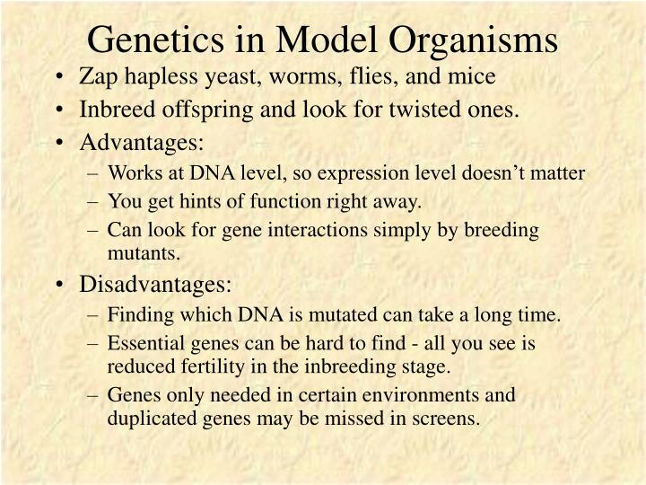 Genetics in Model Organisms