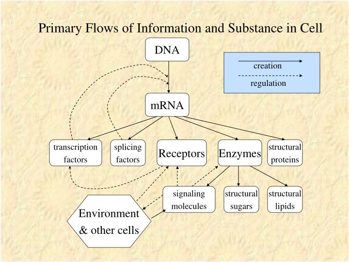 Primary Flows of Information and Substance in Cell