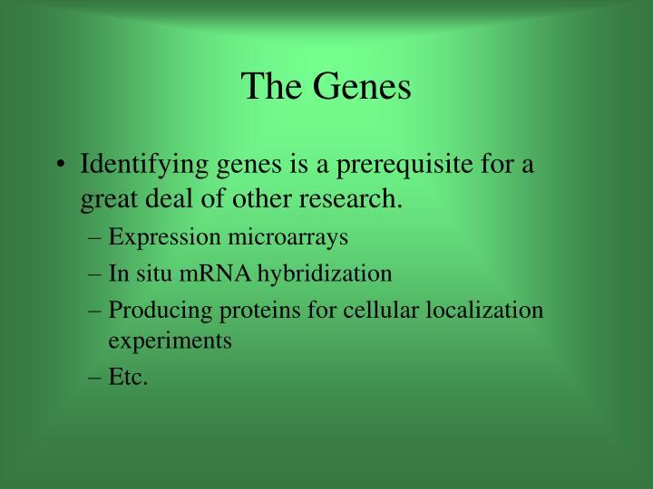 The Genes
