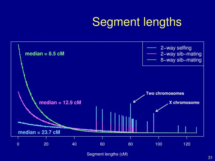 Segment lengths