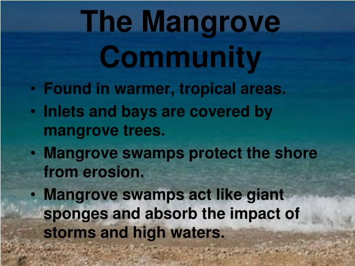 The Mangrove Community