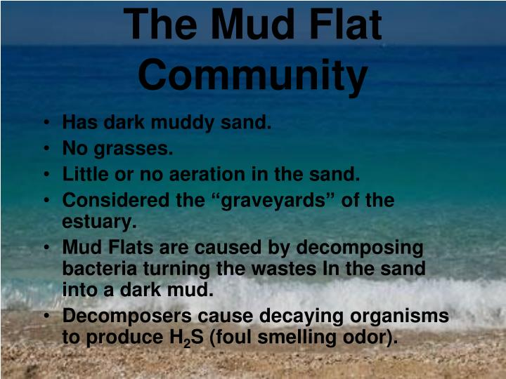 The Mud Flat Community