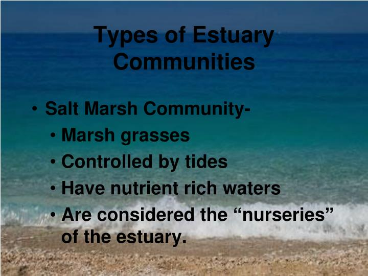 Types of Estuary Communities