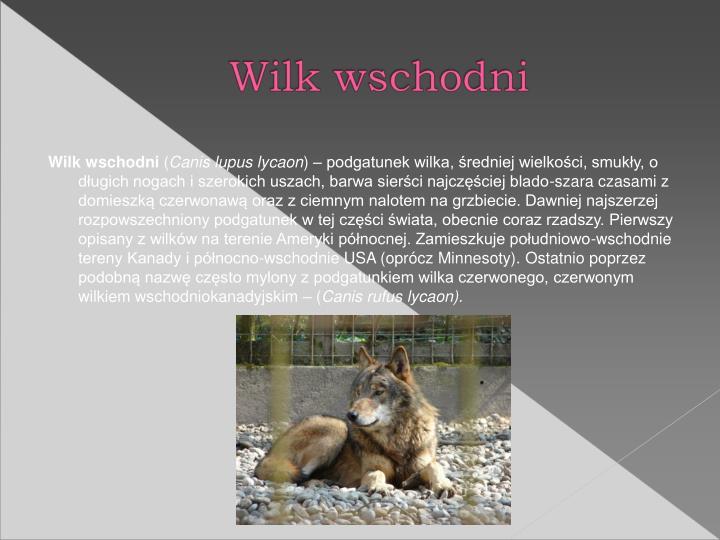 Wilk wschodni