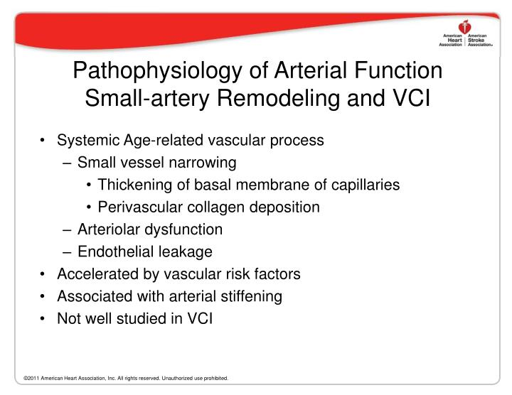Pathophysiology of Arterial Function