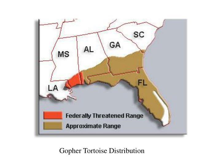 Gopher Tortoise Distribution