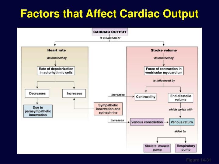 Factors that Affect Cardiac Output