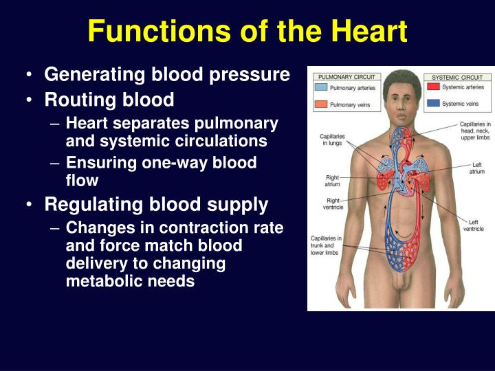 Functions of the Heart