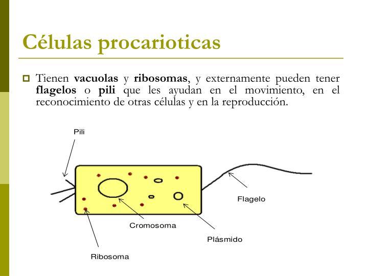 Células procarioticas