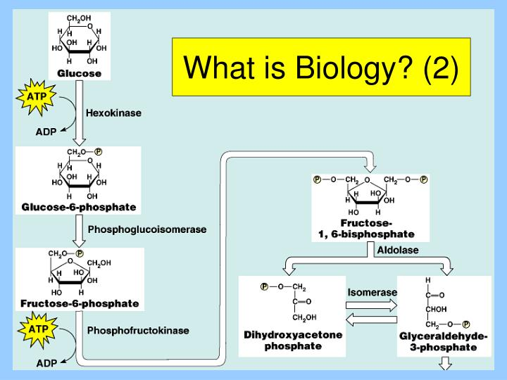 What is Biology? (2)