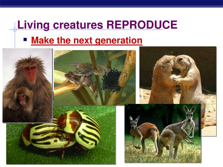 Living creatures REPRODUCE