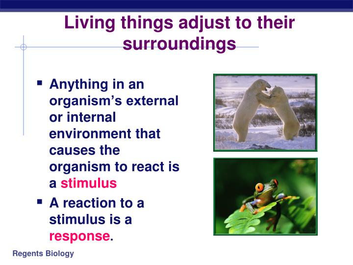 Living things adjust to their surroundings