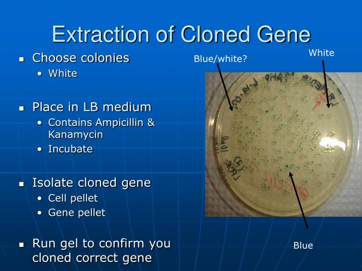Extraction of Cloned Gene