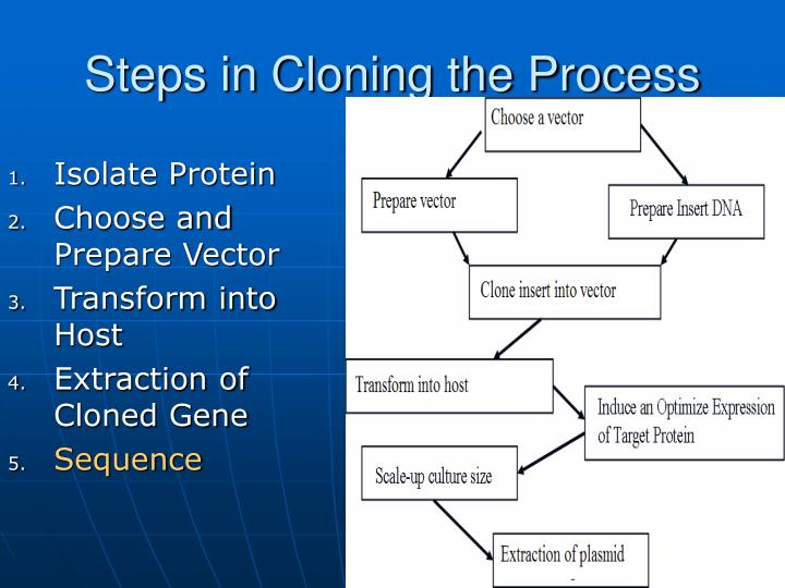 Steps in Cloning the Process