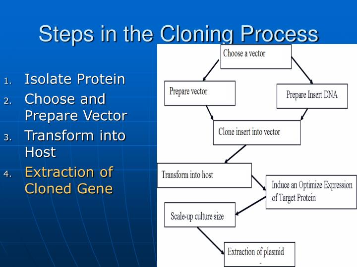 Steps in the Cloning Process