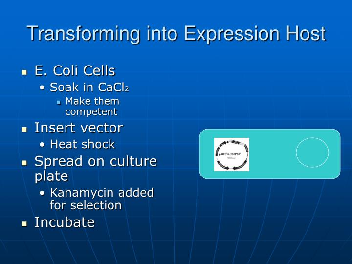 Transforming into Expression Host