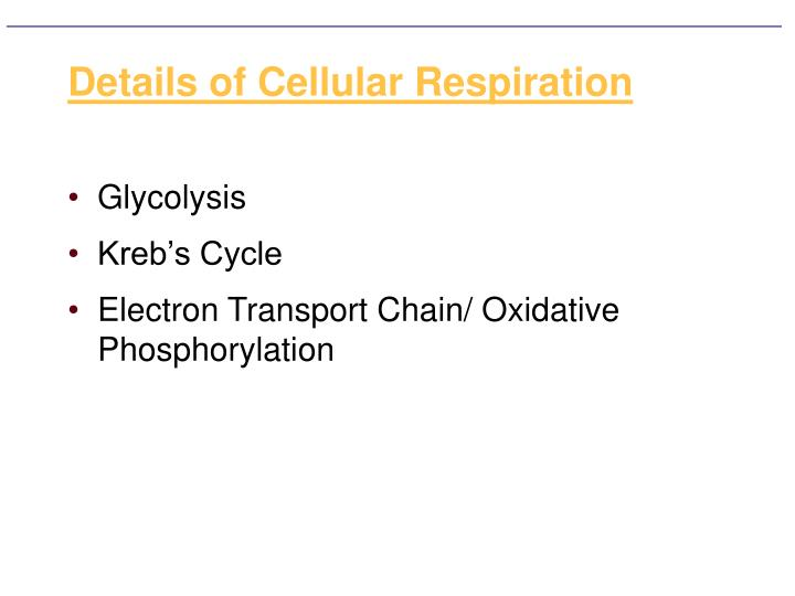 Details of cellular respiration