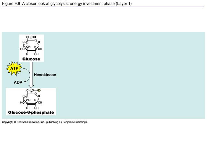 Figure 9.9  A closer look at glycolysis: energy investment phase (Layer 1)