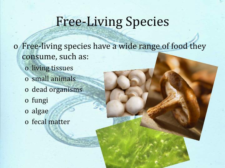 Free-Living Species