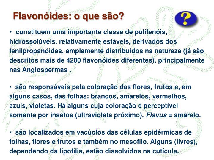 Flavonóides: o que são?