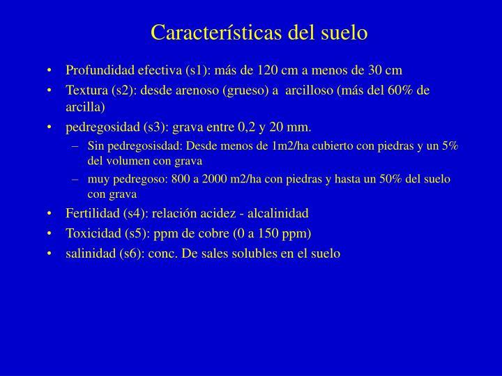 Características del suelo