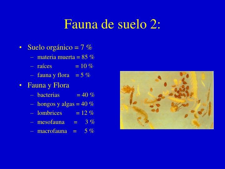 Fauna de suelo 2: