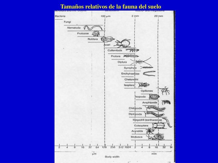 Tamaños relativos de la fauna del suelo