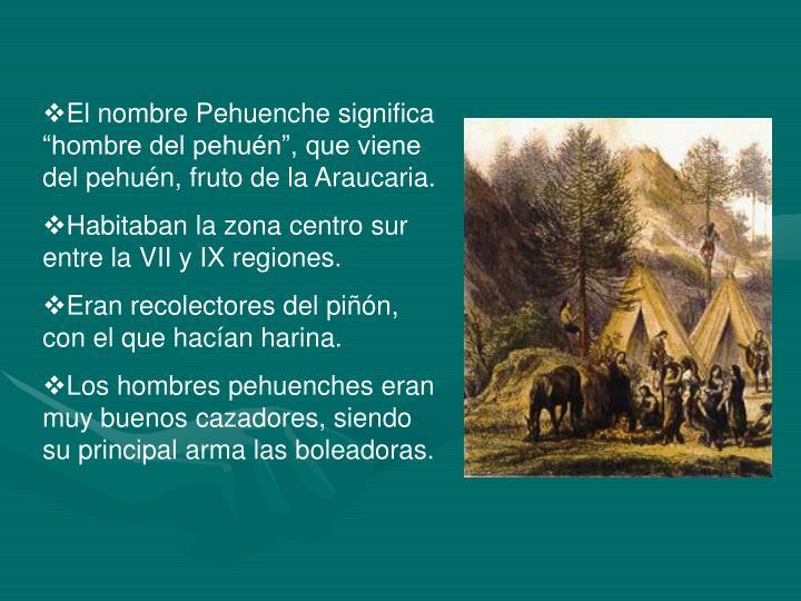 """El nombre Pehuenche significa """"hombre del pehuén"""", que viene del pehuén, fruto de la Araucaria."""