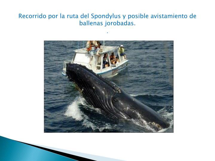 Recorrido por la ruta del Spondylus y posible avistamiento de ballenas jorobadas.