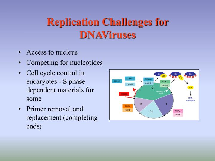 Replication challenges for dnaviruses