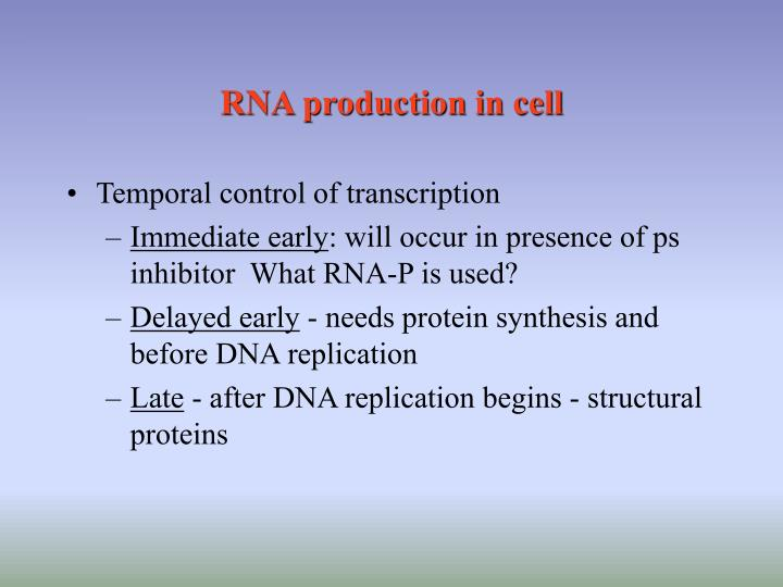 RNA production in cell