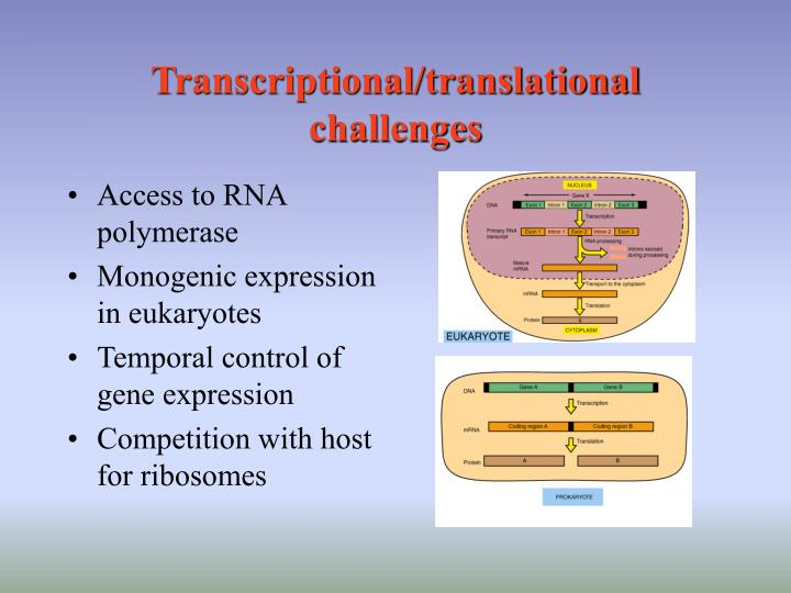 Transcriptional/translational challenges