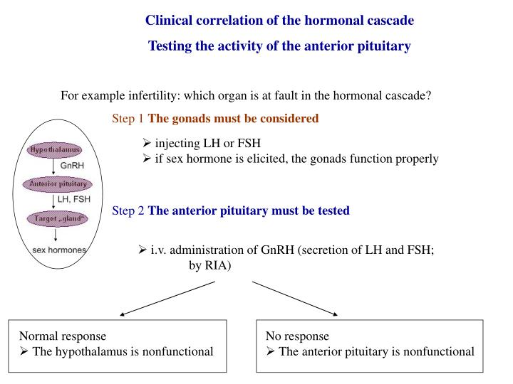 Clinical correlation of the hormonal cascade