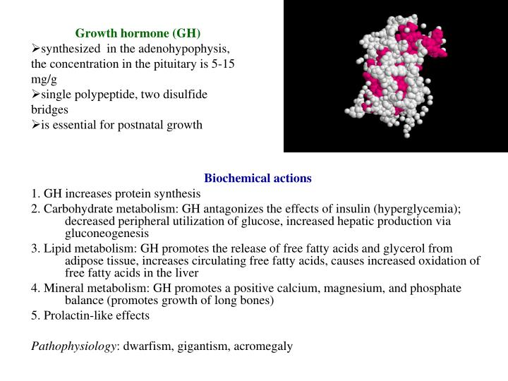 Growth hormone (GH)