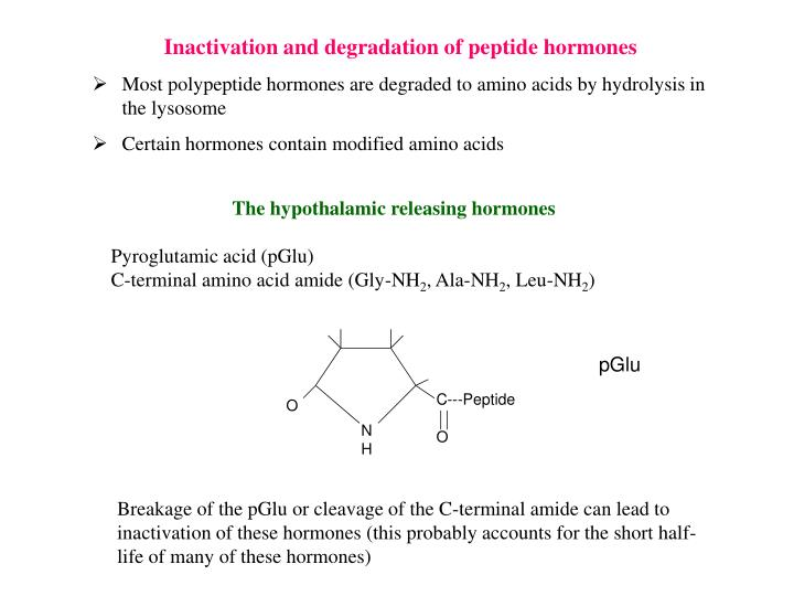 Inactivation and degradation of peptide hormones