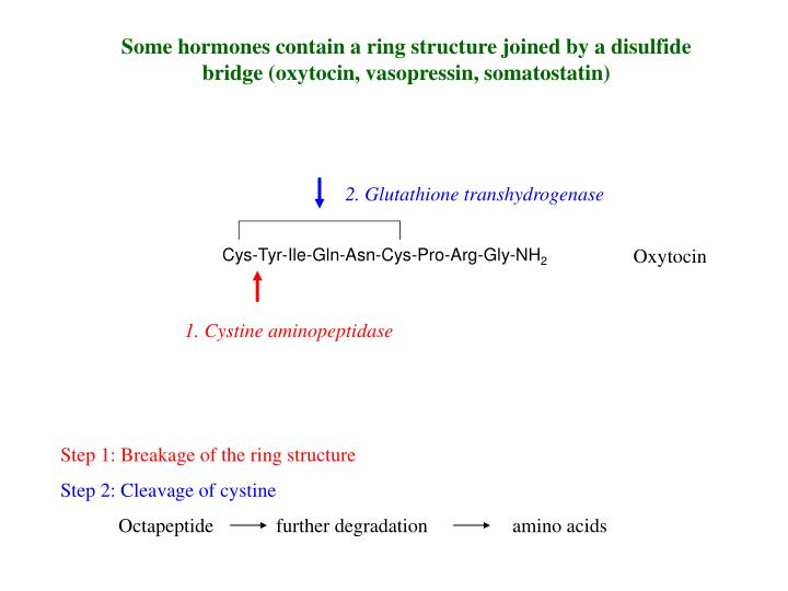 Some hormones contain a ring structure joined by a disulfide bridge (oxytocin, vasopressin, somatostatin)