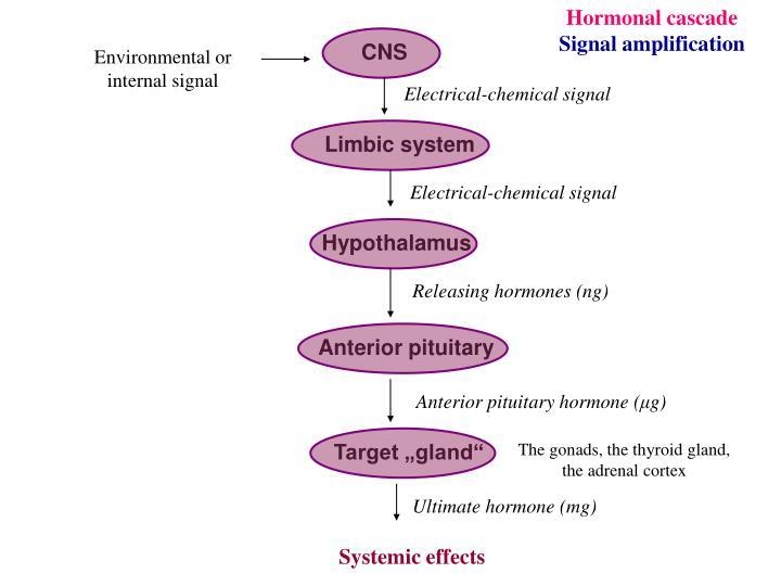 Hormonal cascade