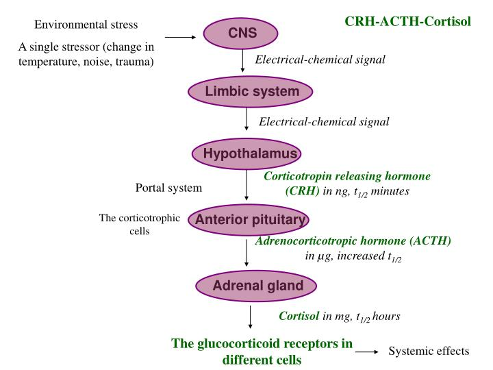 CRH-ACTH-Cortisol